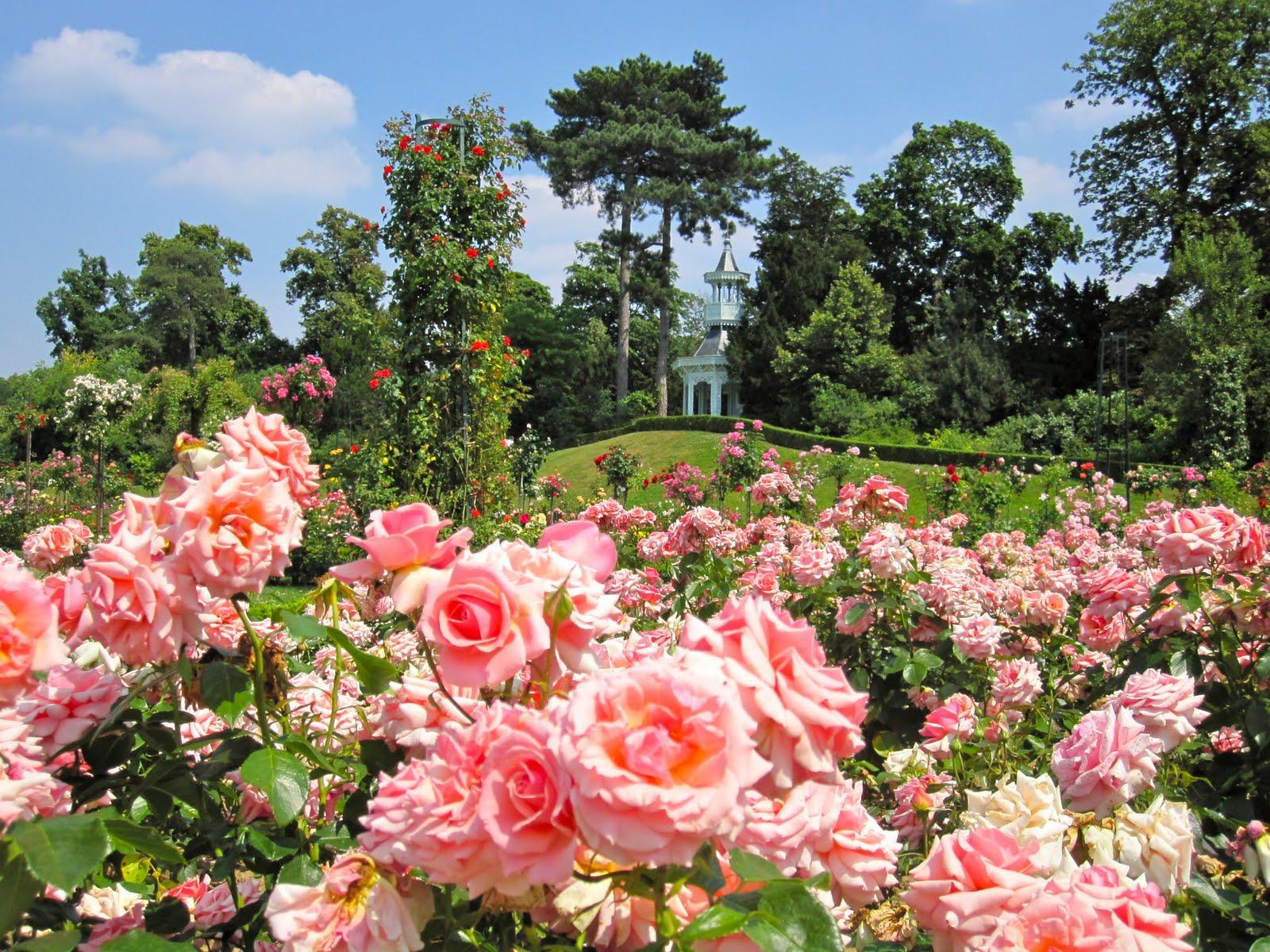 La vie en roses parc de bagatelle 8 9 juin infos 75 for Parterre de roses photos