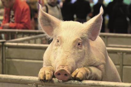 La ferme de l 39 odyss e v g tale salon de l 39 agriculture de - Salon de l agriculture 2014 exposants ...