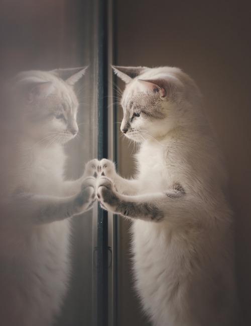 Mon chat fait que miauler - Carabiens le Forum