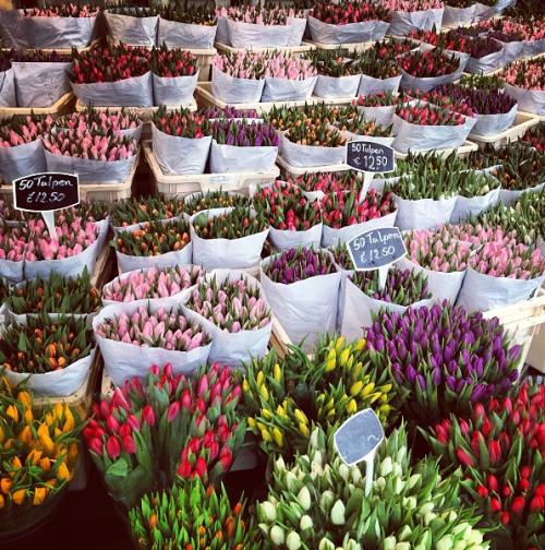 insolite la r colte des oignons de tulipes en hollande vid o infos 75. Black Bedroom Furniture Sets. Home Design Ideas