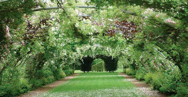 Lire avoir un beau jardin pour presque rien de alex for Beaux arbres de jardin