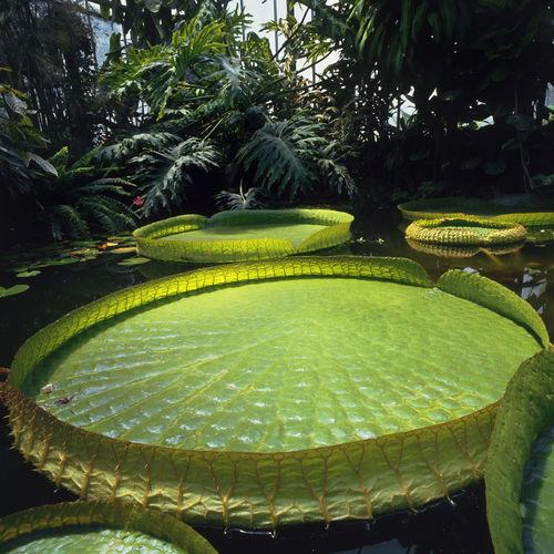 parc-du-moulin-a-tan-et-serres-tropicales-sens-photographie-positif-couleur-58-1-x-58-6-cm_square500x500